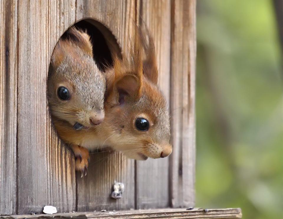 On espère que Papa et Maman écureuil seront heureux dans leur nouveau nid douilletT